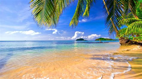Tropical Backgrounds by Wallpaper S Collection 171 Tropical Wallpapers 187