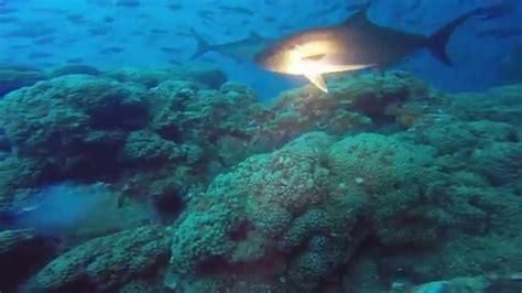 flower gardens diving flower garden banks scuba dive
