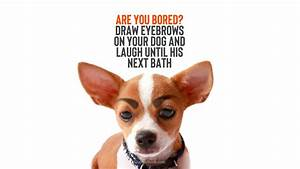 Are you bored? ... Draw Eyebrows Quotes