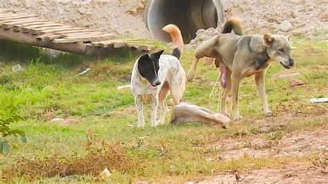street dog mating animals breeding dog mating gentle