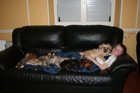empecher un chien de monter sur le canape comment emp 234 cher ma chienne de monter sur le canap 233 page 2