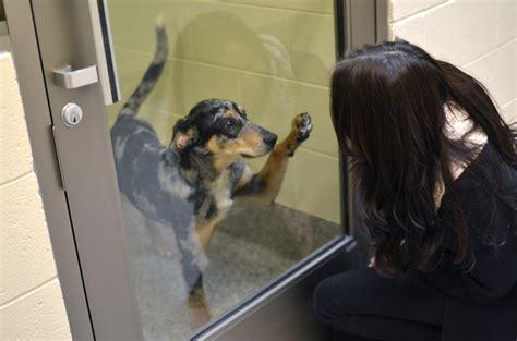 kitchener humane society dog license  wow blog