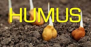 Humus Rich Soil A Garden Foundation