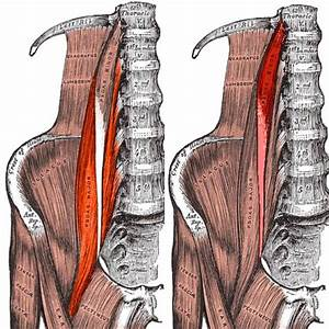 Everything You Need To Know About The Iliopsoas