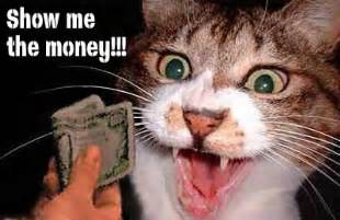 show me images of cats cats show me the money