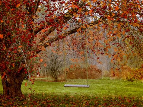 autumn swing pictures   images  facebook
