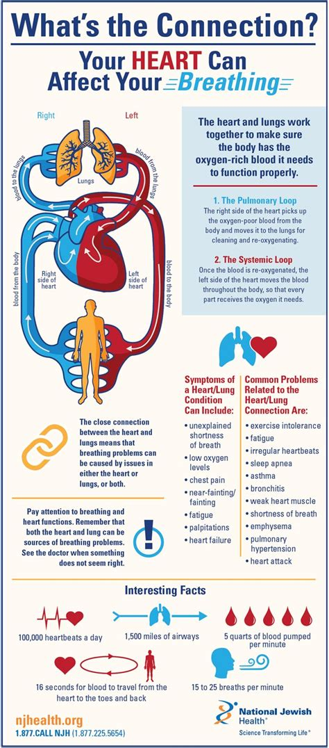 whats  connection  heart  affect  breathing