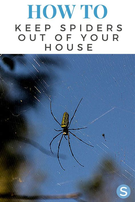 keep spiders out of house 17 best images about bug free home on the fly 7624