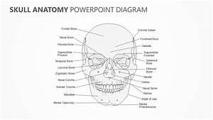 Skull Anatomy Powerpoint Diagram