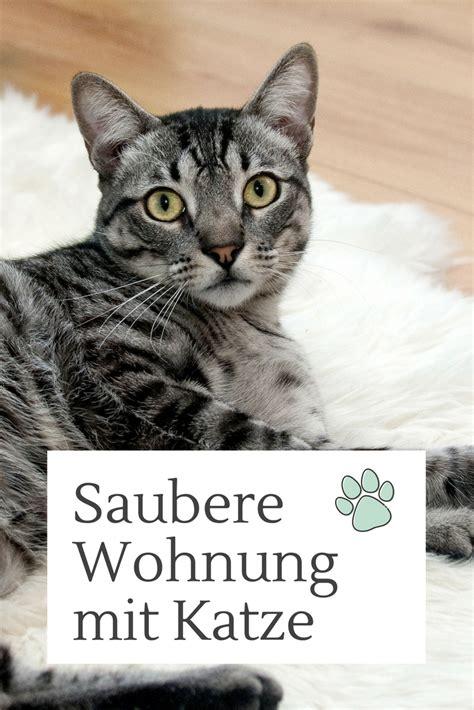 entferne katzenurin und katzenhaare im handumdrehen cat
