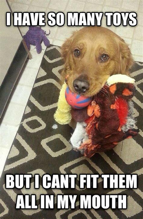 Dog Problems Meme - first world problems dog meme guy