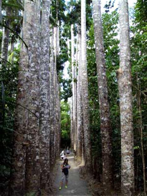 trees  australia trees  sydney   outback