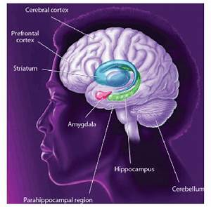 Different Brain Areas And Systems Mediate Distinct Forms