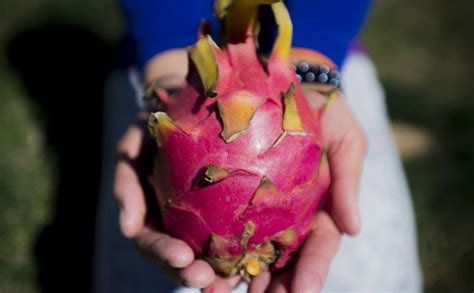 7 Fruits That Look Like One Thing, But Taste Like Another ...