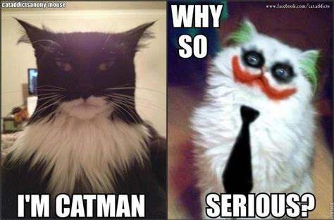 batman funny joker cat meme serious cats why memes quotes animals relatably quotesgram kitty im halloween jokers discover