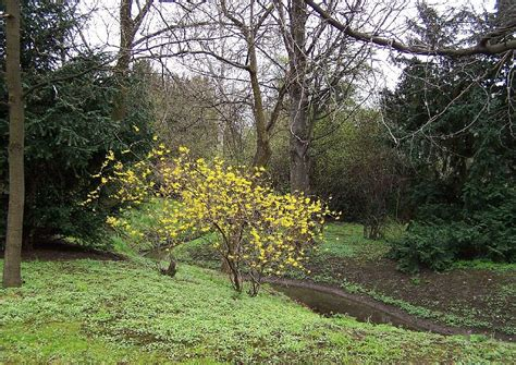 Englischer Garten Dresden by B 252 Rgerwiese Dresden 04 Landschaftsgarten Englischer Garten