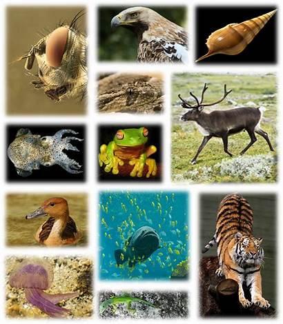 Wikipedia Biodiversity Global Animals Kingdom Wiki