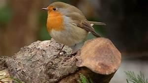 Kleine Vögel Im Garten : v gel im garten ansiedeln tipps sat 1 ratgeber ~ Lizthompson.info Haus und Dekorationen