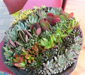 succulent container garden ideas ideas home inspirations
