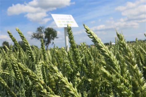 chambre agriculture haut rhin les bonnes clés pour se faire du blé phr le paysan du