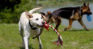 Laisser Un Chien Seul Quand On Travaille : prendre un second chien ~ Medecine-chirurgie-esthetiques.com Avis de Voitures