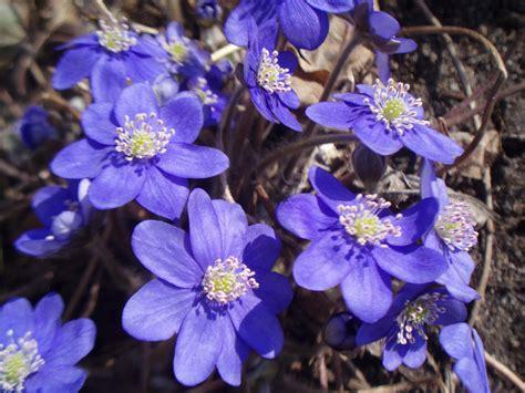Piepildīts laiks: Pasaka par pavasara brīnumiem...