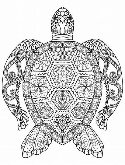 Coloring Adult Pages Printable Adults Turtle Sea