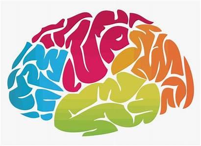 Brain Clipart Mental Health Transparent Cauliflower Kindpng