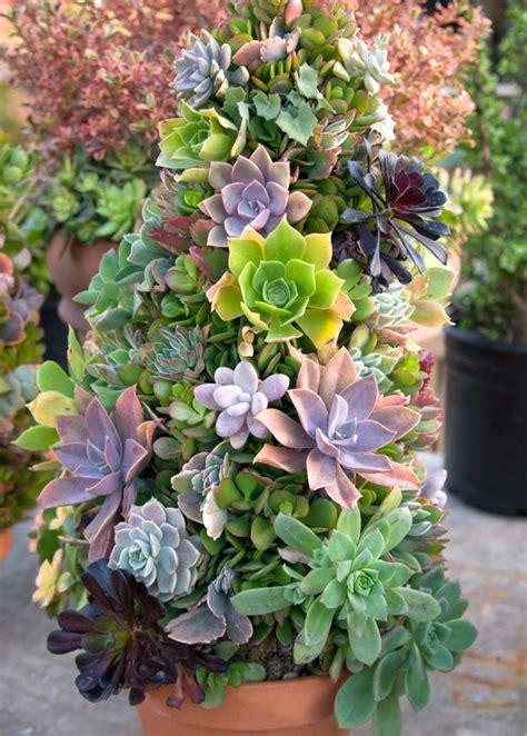 Composition Plantes Grasses Exterieur Plantes Succulentes 75 Id 233 Es De Compositions Florales