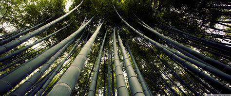 Japanese Giant Bamboo 4k Hd Desktop Wallpaper For 4k Ultra
