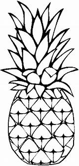 Pineapple Coloring Pages Clipart Fruits Advertisement sketch template