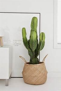 Pot A Cactus : 99 great ideas to display houseplants indoor plants decoration balcony garden web ~ Farleysfitness.com Idées de Décoration