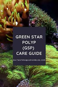 Green Star Polyps  Soft Coral Care Guide For Reef Aquarium