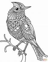 Coloring Pages Printable Cardinal Drawing Zentangle Northern Birds Flowers Bird Line Mockingbird Louisville Cardinals Adults Cute Getcolorings Getdrawings Print Colorings sketch template