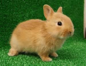 ウサギ:... の動物画像まとめ 犬猫ウサギ
