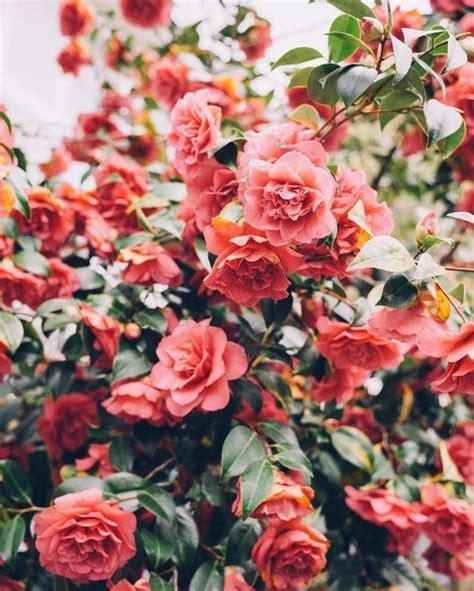 Pinterest Abbyhanson95 Flower Garden Flowers