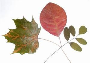Feuilles D Automne à Imprimer : feuilles d 39 automne s ch es t te modeler ~ Nature-et-papiers.com Idées de Décoration
