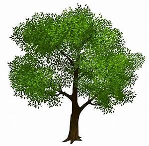 green tree clip art – Clipart Download