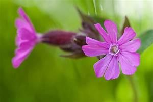 Pflanzen Im Mai : blumen im mai foto bild pflanzen pilze flechten bl ten kleinpflanzen wildpflanzen ~ Buech-reservation.com Haus und Dekorationen