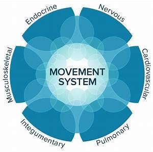 Apta Movement System Diagram