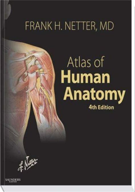 Coloring Atlas Of Human Anatomy by My Absolute Favorite Anatomy Book By Frank Netter