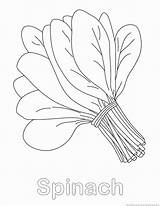 Spinach Coloring Pages 123coloringpages Vegetable sketch template