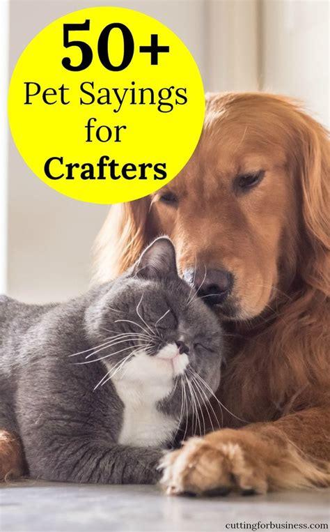 Best 25 Cat Sayings Ideas On Pinterest Kitten Quotes