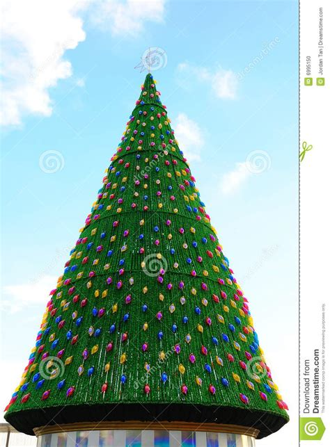 big christmas tree stock photo image of christmas cone