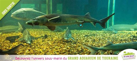 aquarium de touraine horaires grand aquarium de touraine id 233 e de sortie en val de loire val de loire