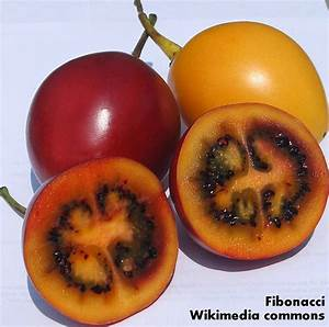 Roots 'n' Shoots: Tamarillo (Tree Tomato) - How to Grow ...