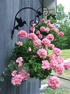 Bac A Fleur Balcon : plantes retombantes fleurs et vivaces pour un ext rieur fleuri ~ Teatrodelosmanantiales.com Idées de Décoration