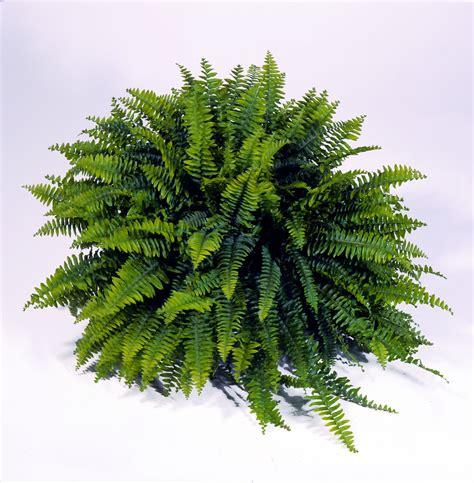 pin  joeanne davies  landscapes ferns plant leaves