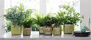 Große Zimmerpflanzen Pflegeleicht : zimmerpflanzen sch n reinigend und pflegeleicht ~ Lizthompson.info Haus und Dekorationen