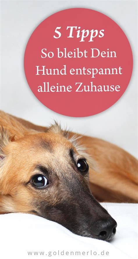 Glueckliche Haustiere Sauberkeit Und Erziehung by Hund Alleine Zuhause So Klappt S Ganz Entspannt